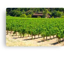 Napa Valley Vineyard Canvas Print