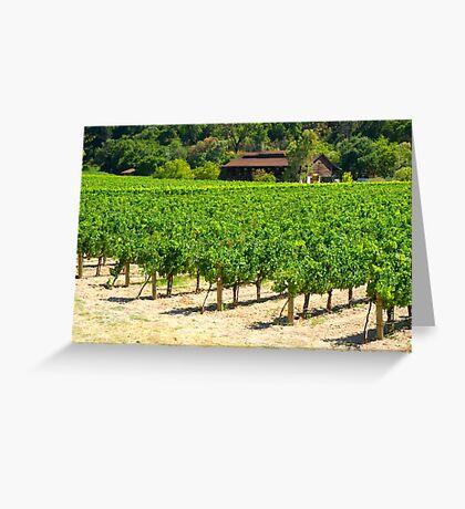 Napa Valley Vineyard Greeting Card