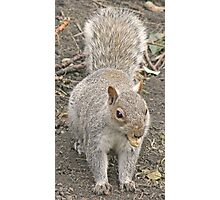A Squirrel With A Monkey Nut Photographic Print