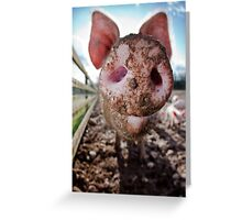 Snout Greeting Card