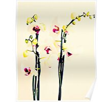 Queen of Flowers Poster