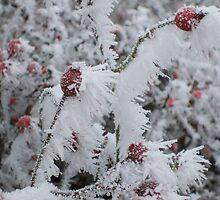white frost 8 by wespenspinne