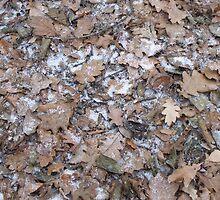 leaves by wespenspinne