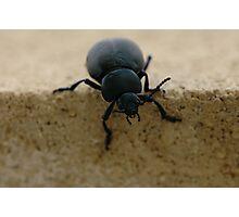 black insect calosoma Photographic Print