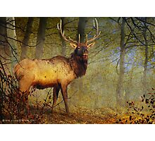 aspen forest bull elk Photographic Print