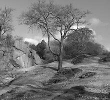 Tree by JoLennox