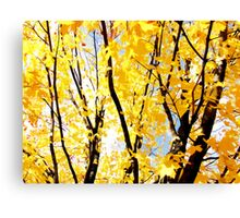 fall trees Canvas Print