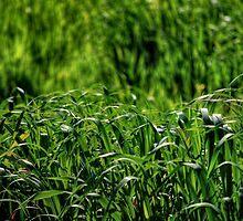 Fields Of Green by BluAlien