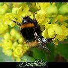 Bumblebee by Rowan  Lewgalon