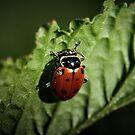 Ladybug #2 by BluAlien
