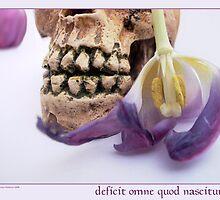 deficit omne quod nasciture by Rowan  Lewgalon