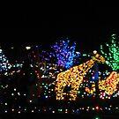 Christmas Lights - Children's Garden  ^ by ctheworld