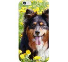 Australian Shepherd iPhone Case/Skin