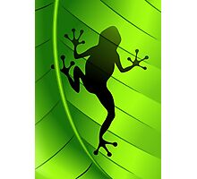 Frog Shape on Green Leaf Photographic Print