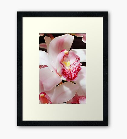 One Lacy Orchid Framed Print