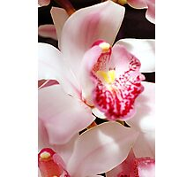 One Lacy Orchid Photographic Print
