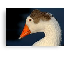 Goose with Feather in its Bill Canvas Print