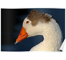 Goose with Feather in its Bill Poster