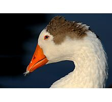 Goose with Feather in its Bill Photographic Print