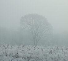 In the fog by steve keller