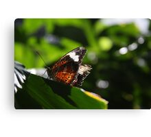 Light on the Wings Canvas Print