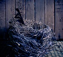 Empty Nest by Colin Tobin