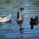 Duck, duck, goose by Jessie Harris