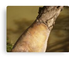 withered arm Canvas Print