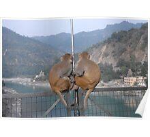 Ganga Monkey Couple Poster