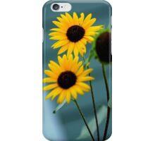 Sunshine Sunflowers iPhone Case/Skin