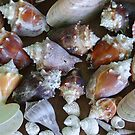 ANCLOTE TREASURES by Leigh Karchner