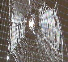 Caught in a Web by mearmbrus