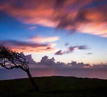 Windswept by fernblacker