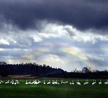 under the rainbow by gabryshak