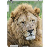 Taking care of Scarface (Panthera leo) iPad Case/Skin