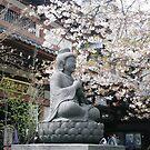 Sakura by Melanie  McQuoid