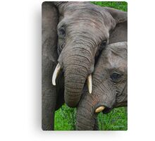 """""""Just Married"""" (Loxodonta africana) Canvas Print"""