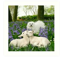 Snowdrop the Maltese & the Spring Lambs. Art Print