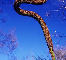 Grass Tree by Travis Easton