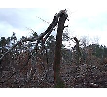 tree broken by the storms Photographic Print