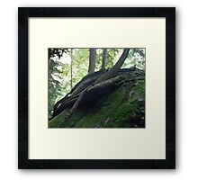 HDR Composite - Haze and Tree Roots on Rock Framed Print