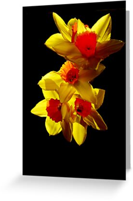 Abstract Daffodils by Joel Kempson