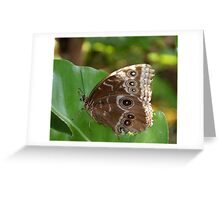 Butterfly House Guest Greeting Card