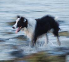Run Rover Run ! by brilightning