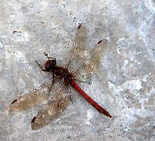 Dragonfly on harbour wall by Merice Ewart Marshall - LFA