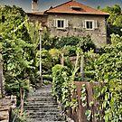Tuscany by Kurt  Tutschek