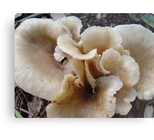 Unidentified Fungi Metal Print