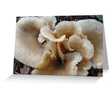 Unidentified Fungi Greeting Card