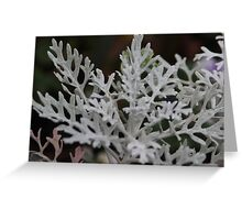 Silvery plant on a winters day Greeting Card