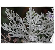 Silvery plant on a winters day Poster